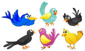Birds with different colors — Stock Vector