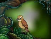 A bird at the rainforest — Stock Vector
