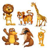 Diferentes tipos de animales de la tierra — Vector de stock