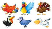 Different types of birds — Stock Vector