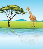 A giraffe beside the river — Stock Vector