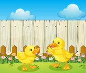 Deux canards de bébé à l'intérieur de la clôture — Vecteur