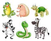 Different species of animals — Stock Vector