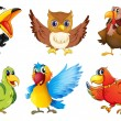 Different kinds of birds — Imagen vectorial