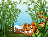 A bamboo forest with a tiger — Stockvector