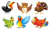 Different kinds of birds — Stock Vector