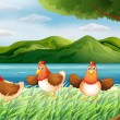 Three chickens at riverbank — Stock Vector #22023577