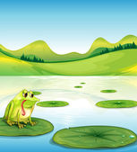 A hungry frog above the waterlily — Stock Vector