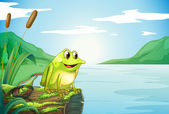 A trunk at the river with a frog — Stock Vector