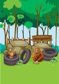 Orangutans at the zoo — Stock Vector