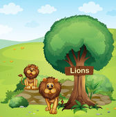 A signboard posted in a tree and the two lions — Stock Vector