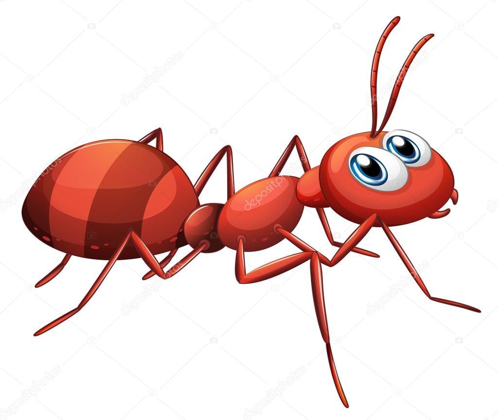 Red Ant Cartoon - autoblogger24