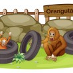 An old and a young orangutan — Stock Vector #22822444
