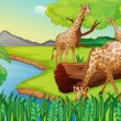 Stock Vector: Three giraffes at the riverside
