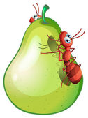 A pear fruit with two ants — Stock Vector