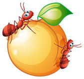 An orange fruit with two ants — Stock Vector