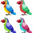 four colorful parrots — Stock Vector