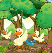 Three white ducks in the middle of the woods — Stock Vector