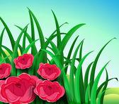 Five red roses in the garden — Stock Vector