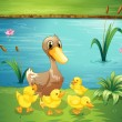 A mother duck with her ducklings in the river - Stock Vector