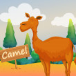 Stock Vector: Camel with wooden signboard