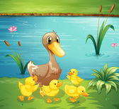 A mother duck with her ducklings in the river — Stock Vector