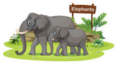 Two elephants near the signboard — Stock Vector