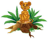 A trunk with a young lion — Vector de stock