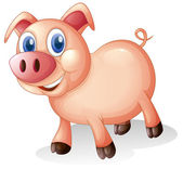 A fat and smiling pig — Stock Vector