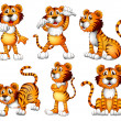 Six positions of a tiger — Stock Vector