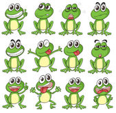 Different faces of a frog — Stock Vector