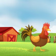A rooster in the farm with a wooden house at the back — Stock Vector #24609637