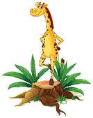 A giraffe standing above a chopped wood — Stock Vector