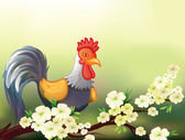 A chicken in a cherry blossom tree — Stock Vector
