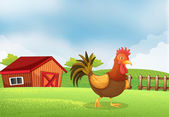 A rooster in the farm with a wooden house at the back — Stock Vector
