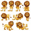 Lions in different positions — Stock Vector
