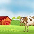 A cow in the farm with a barn house — Stock Vector