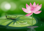 A grasshopper above a waterlily beside a pink flower — Stock Vector