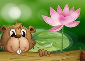 A beaver beside a pink flower — Stock Vector