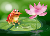 A frog above the waterlily beside a pink flower — Stock Vector