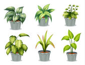 Six leafy plants with pot — Stock Vector