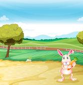 A bunny holding a carrot — Stock Vector