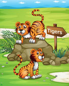 Two tigers near the wooden arrowboard — Stock Vector