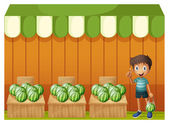 A kid at the watermelon fruitstands — Stock Vector