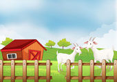 Two white goats at the farm — Stock Vector