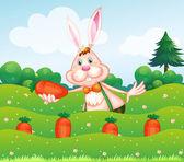 Garden adlı bir carrot tutan bir tavşan — Stok Vektör