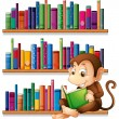 Monkey reading in front of bookshelves — Stock Vector #27416057