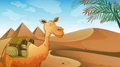 A camel at the desert — Stock Vector