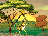 A giraffe following the wooden arrow guide — Stock Vector