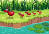 A colony of red ants at the riverbank — Stock Vector
